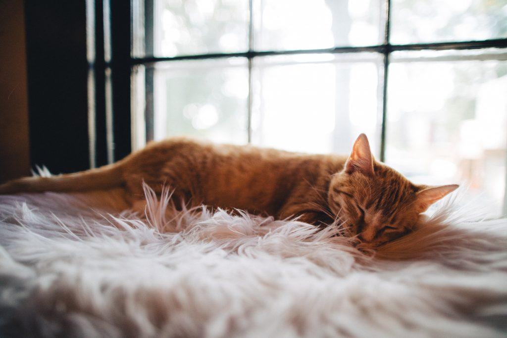 Chat qui dort sur un tapis tout doux proche d'un fenêtre