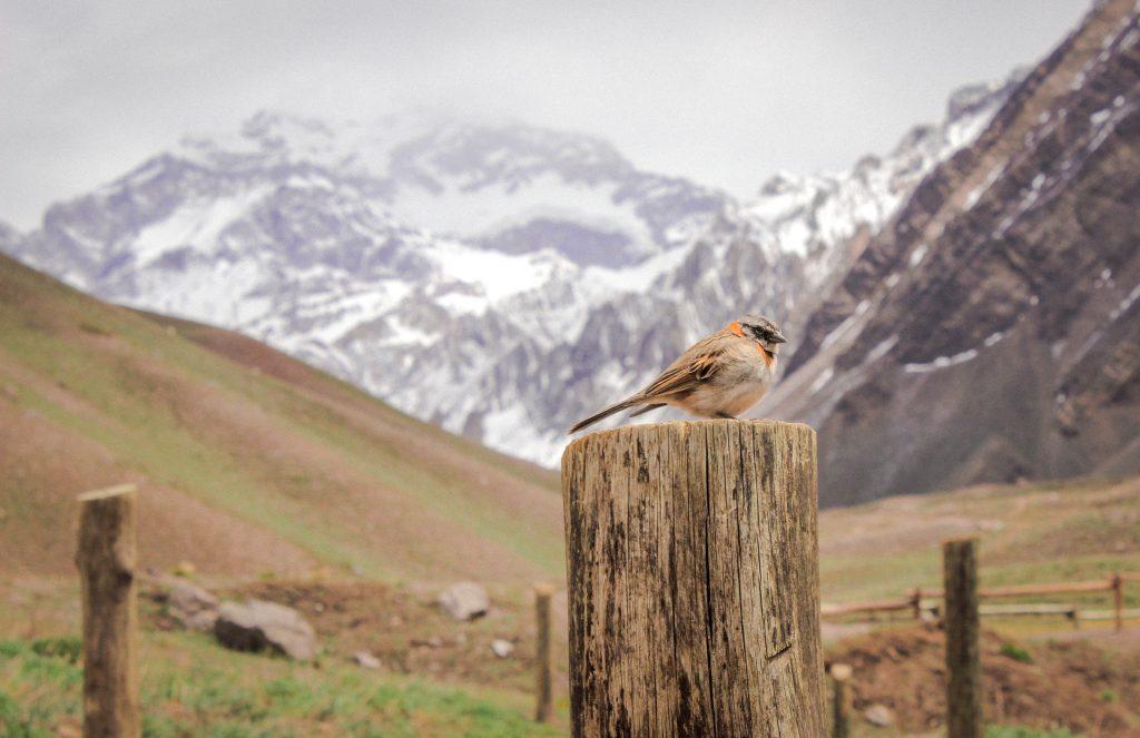 Un oiseau est couché sur un poteau avec au fond un paysage de montagne enneigé