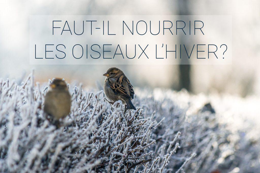 Faut-il nourrir les oiseaux l'hiver? deux oiseaux sur un buisson