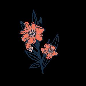 Fleurs sauvages creakoa