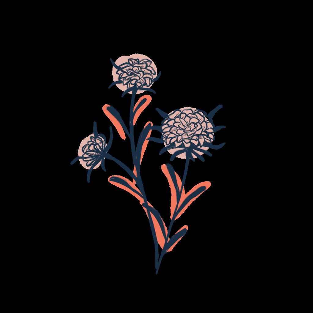 illustration fleur sauvage creakoa