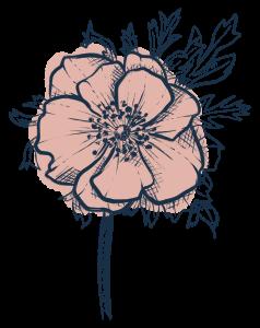 Illustration d'une anémone rose - creakoa